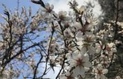 Primavera Barra